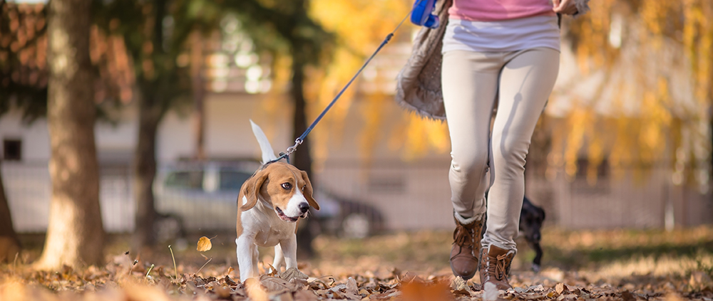 Dog Owner Fitness